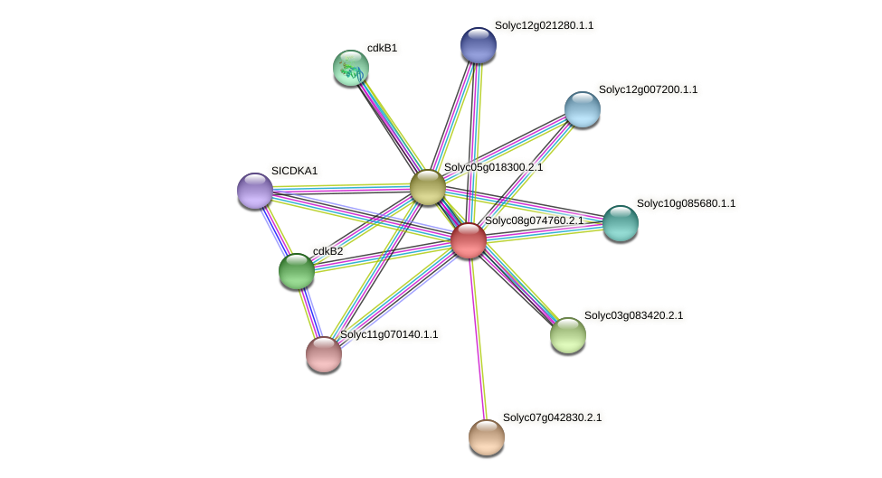 Solyc08g074760.2.1 protein (Solanum lycopersicum) - STRING interaction network