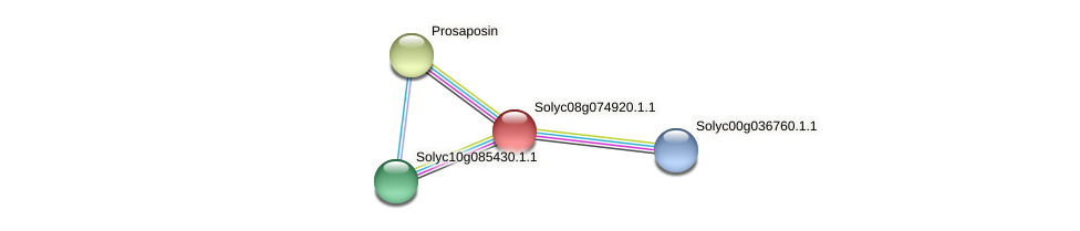 Solyc08g074920.1.1 protein (Solanum lycopersicum) - STRING interaction network