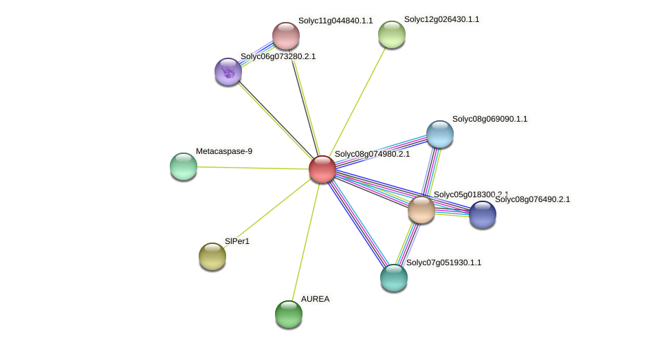 Solyc08g074980.2.1 protein (Solanum lycopersicum) - STRING interaction network