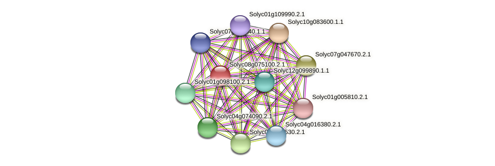 Solyc08g075100.2.1 protein (Solanum lycopersicum) - STRING interaction network