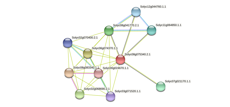 Solyc08g075340.2.1 protein (Solanum lycopersicum) - STRING interaction network