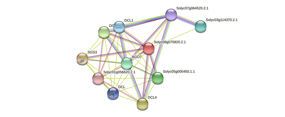 Solyc08g075820.2.1 protein (Solanum lycopersicum) - STRING interaction network