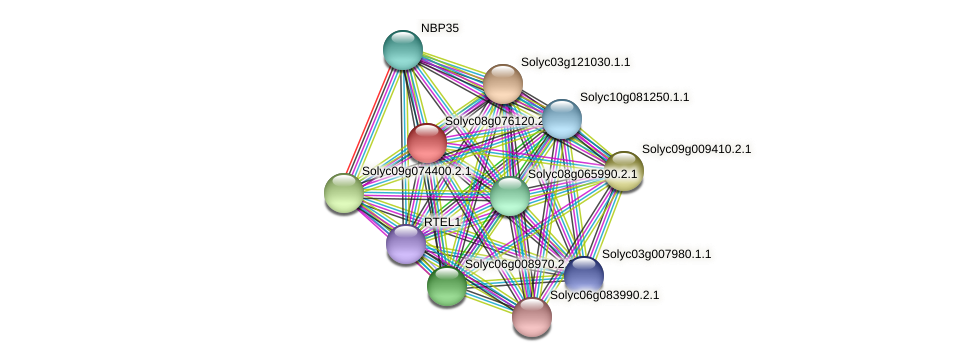 Solyc08g076120.2.1 protein (Solanum lycopersicum) - STRING interaction network