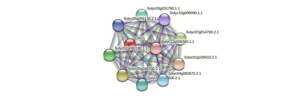 DAD1 protein (Solanum lycopersicum) - STRING interaction network