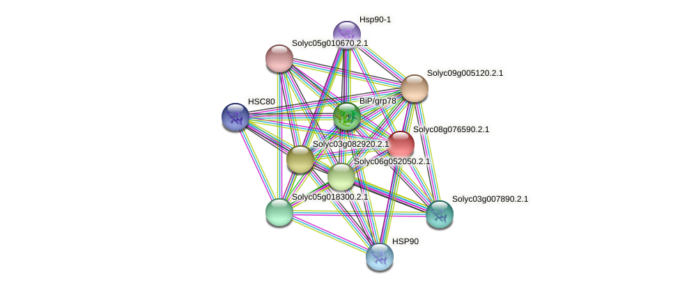 Solyc08g076590.2.1 protein (Solanum lycopersicum) - STRING interaction network