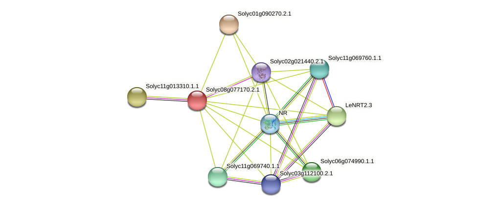 Solyc08g077170.2.1 protein (Solanum lycopersicum) - STRING interaction network