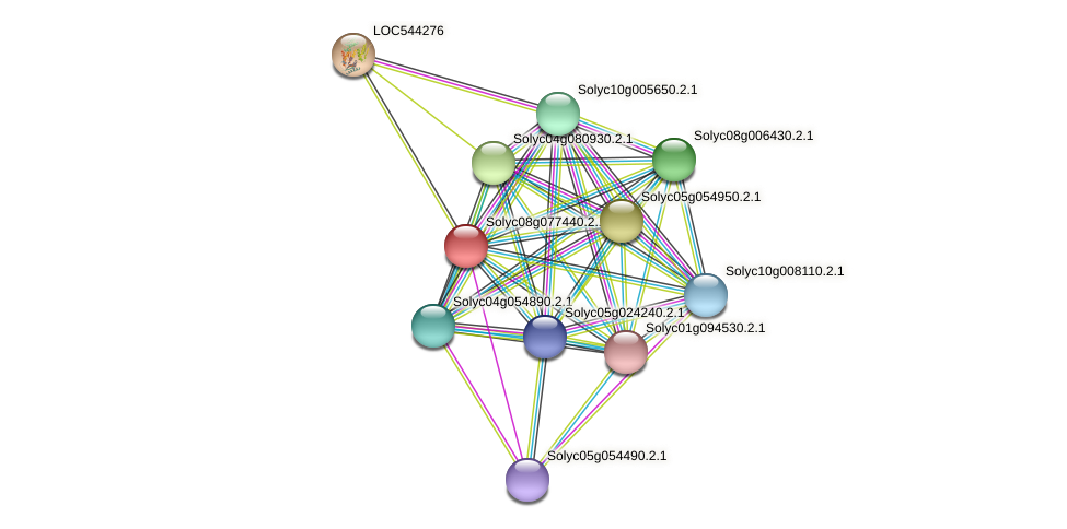 Solyc08g077440.2.1 protein (Solanum lycopersicum) - STRING interaction network