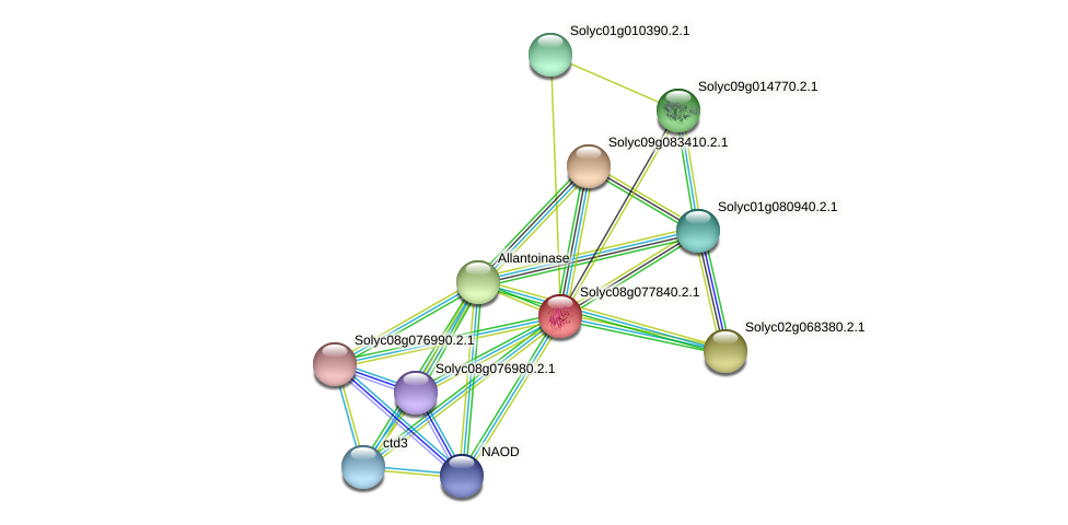 Solyc08g077840.2.1 protein (Solanum lycopersicum) - STRING interaction network