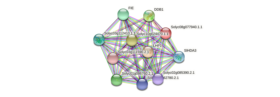 101255419 protein (Solanum lycopersicum) - STRING interaction network