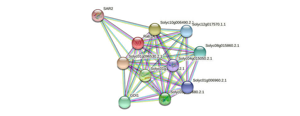 Rab1A protein (Solanum lycopersicum) - STRING interaction network