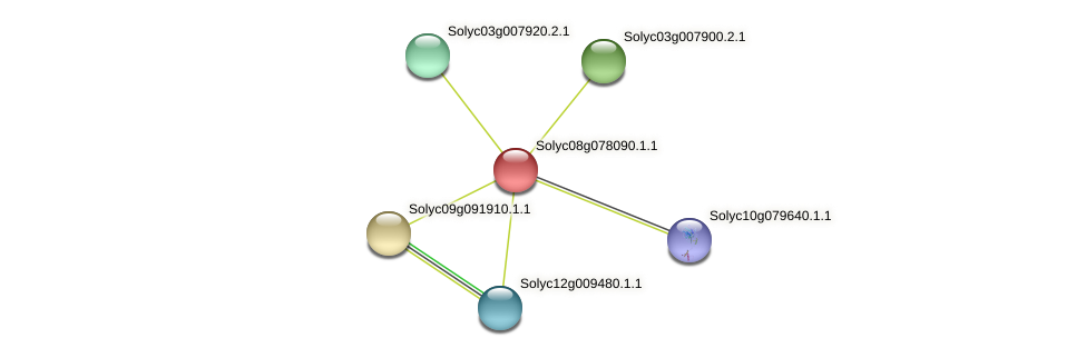 Solyc08g078090.1.1 protein (Solanum lycopersicum) - STRING interaction network
