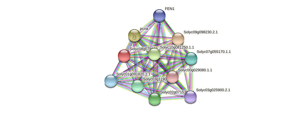 Solyc08g078620.1.1 protein (Solanum lycopersicum) - STRING interaction network
