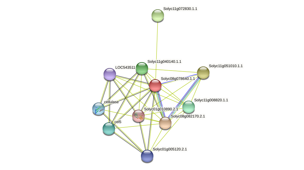 Solyc08g078640.1.1 protein (Solanum lycopersicum) - STRING interaction network