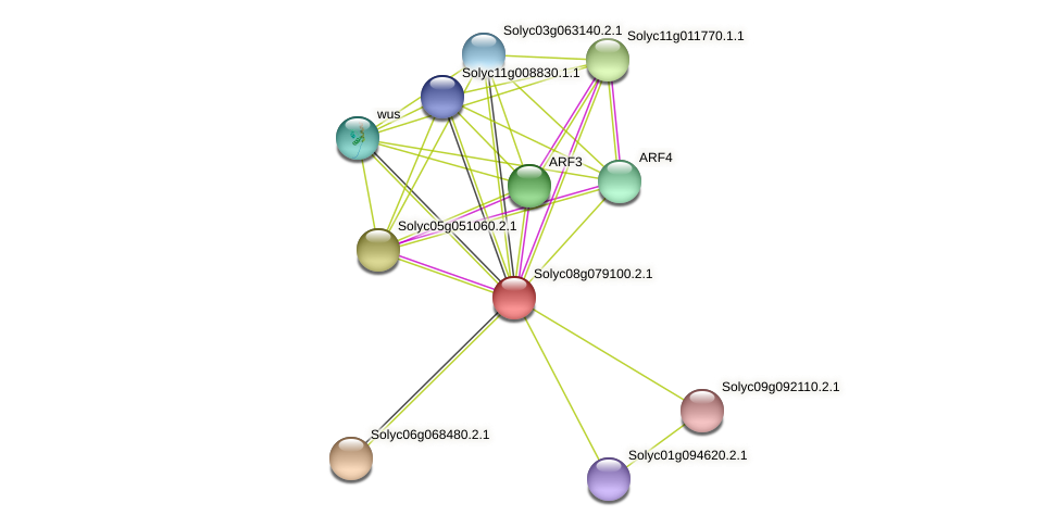 Solyc08g079100.2.1 protein (Solanum lycopersicum) - STRING interaction network