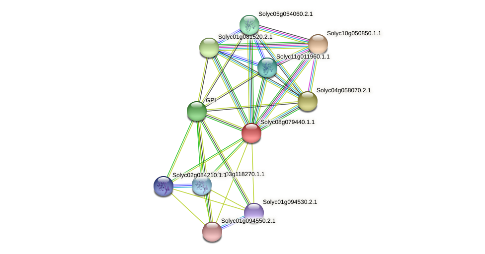 Solyc08g079440.1.1 protein (Solanum lycopersicum) - STRING interaction network