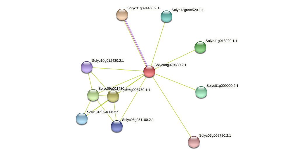 Solyc08g079630.2.1 protein (Solanum lycopersicum) - STRING interaction network