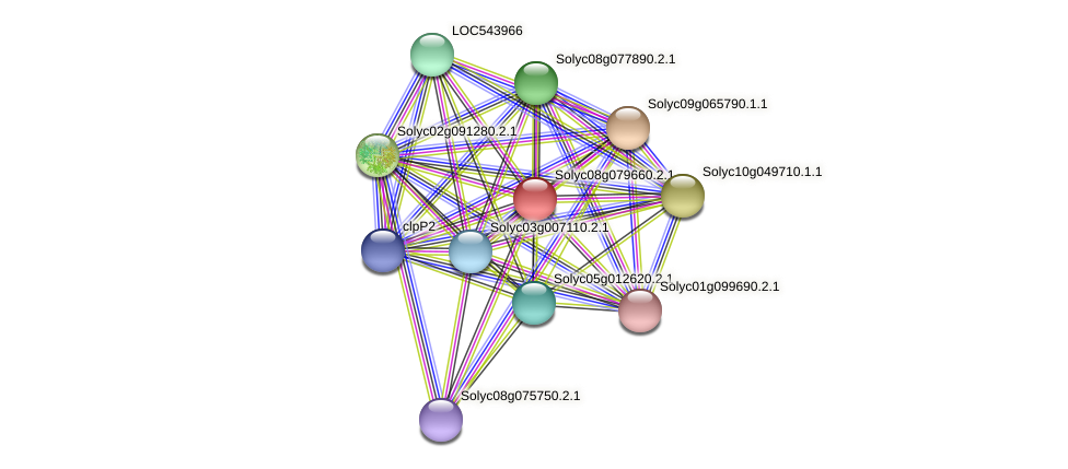 Solyc08g079660.2.1 protein (Solanum lycopersicum) - STRING interaction network