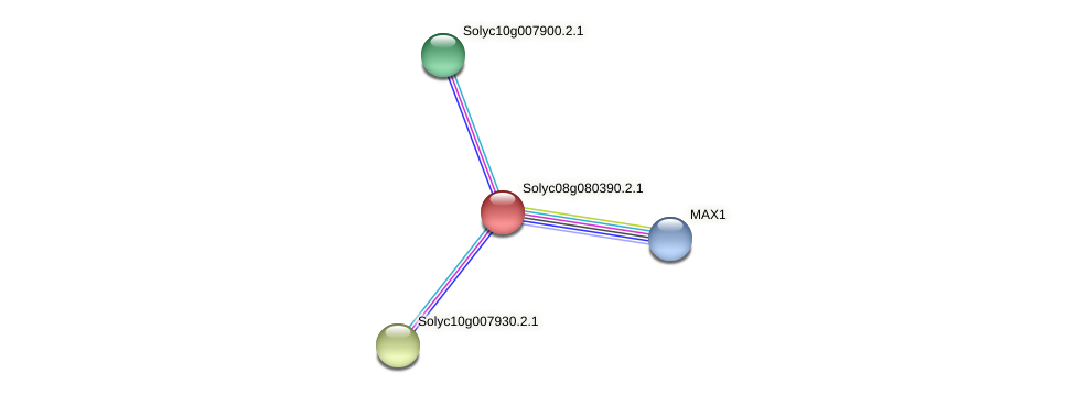 Solyc08g080390.2.1 protein (Solanum lycopersicum) - STRING interaction network