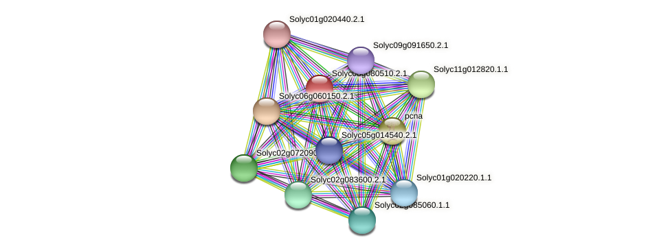 Solyc08g080510.2.1 protein (Solanum lycopersicum) - STRING interaction network