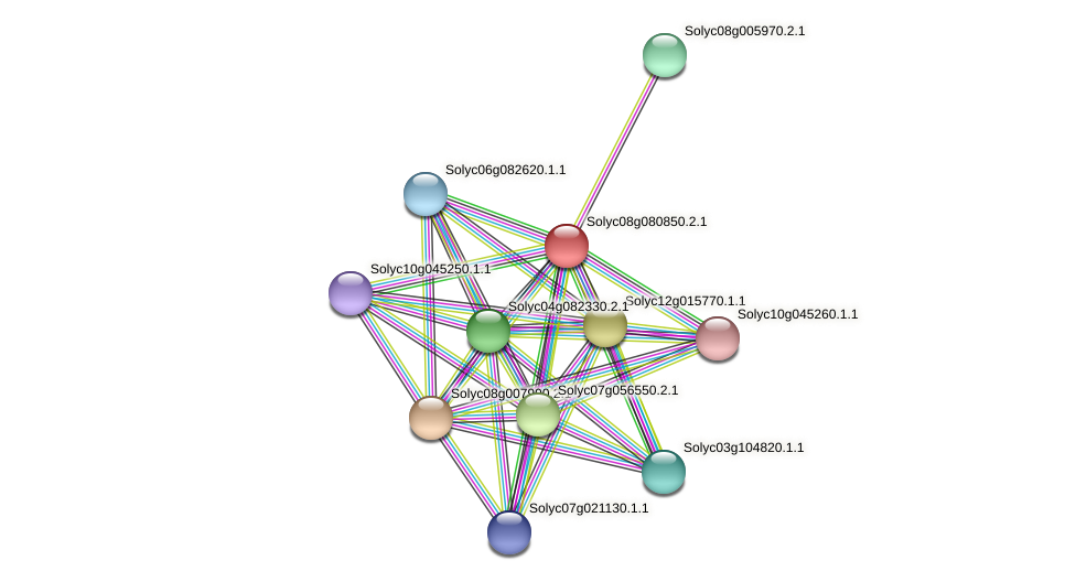 Solyc08g080850.2.1 protein (Solanum lycopersicum) - STRING interaction network