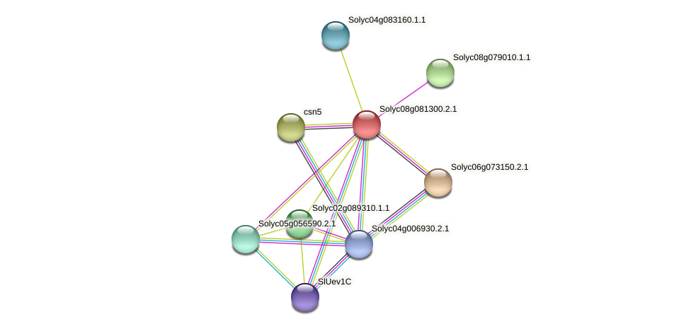 101252613 protein (Solanum lycopersicum) - STRING interaction network