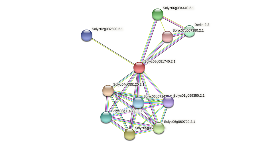 Solyc08g081740.2.1 protein (Solanum lycopersicum) - STRING interaction network
