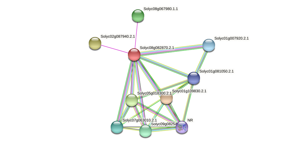 Solyc08g082870.2.1 protein (Solanum lycopersicum) - STRING interaction network