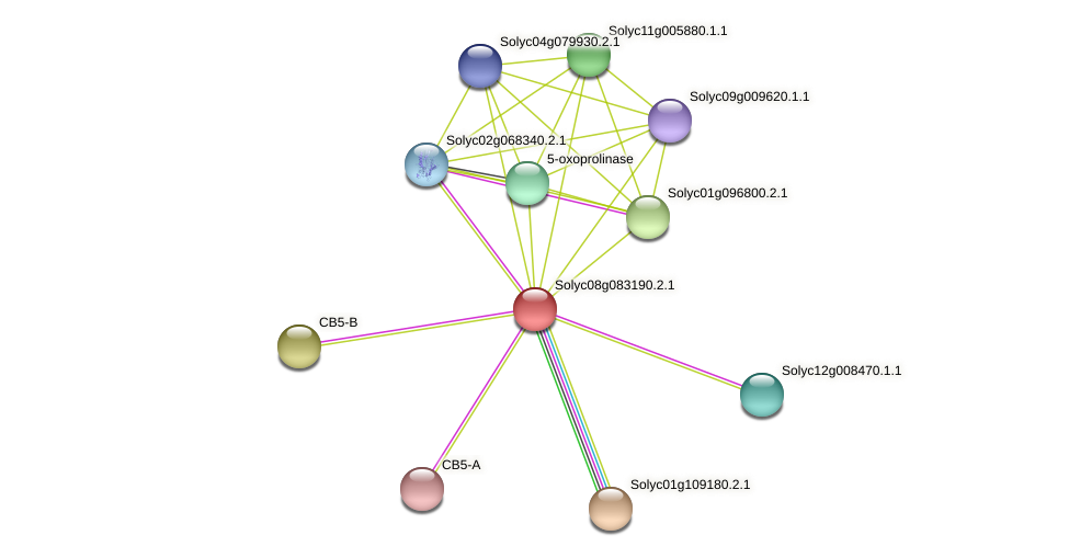 Solyc08g083190.2.1 protein (Solanum lycopersicum) - STRING interaction network