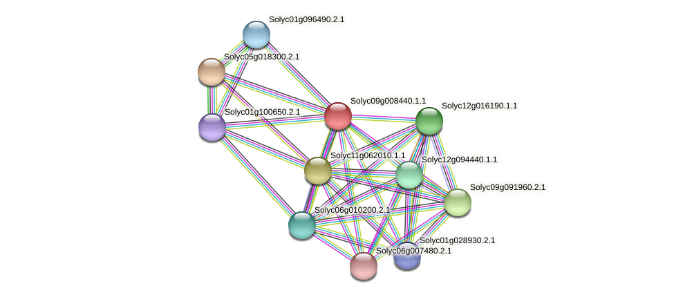 Solyc09g008440.1.1 protein (Solanum lycopersicum) - STRING interaction network