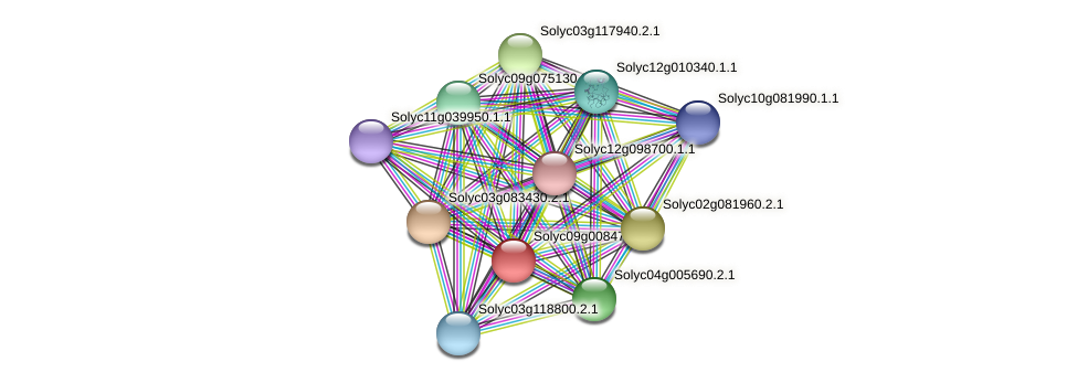 101255621 protein (Solanum lycopersicum) - STRING interaction network