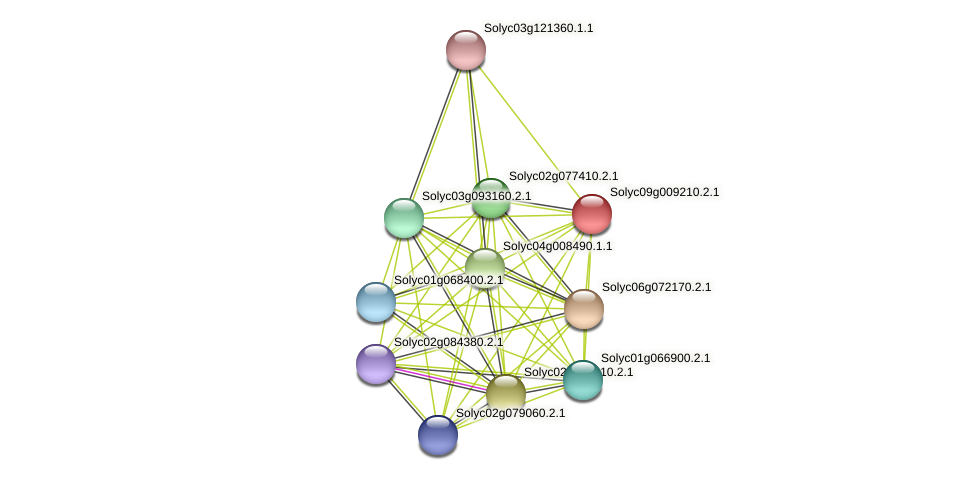 Solyc09g009210.2.1 protein (Solanum lycopersicum) - STRING interaction network
