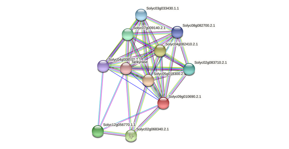 Solyc09g010690.2.1 protein (Solanum lycopersicum) - STRING interaction network