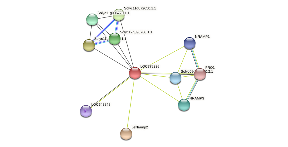 LOC778298 protein (Solanum lycopersicum) - STRING interaction network
