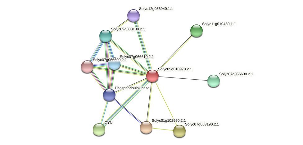 101257401 protein (Solanum lycopersicum) - STRING interaction network