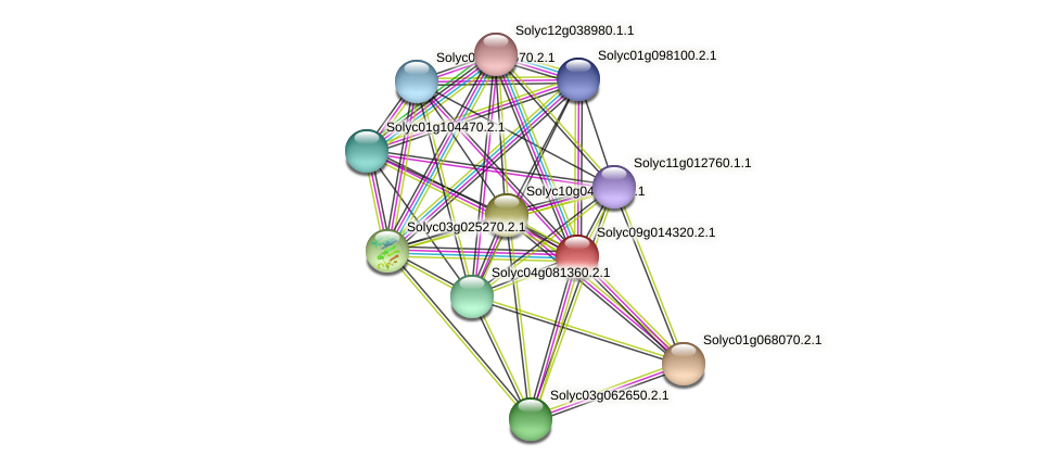 Solyc09g014320.2.1 protein (Solanum lycopersicum) - STRING interaction network