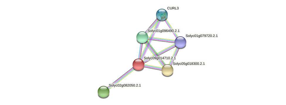 Solyc09g014710.2.1 protein (Solanum lycopersicum) - STRING interaction network