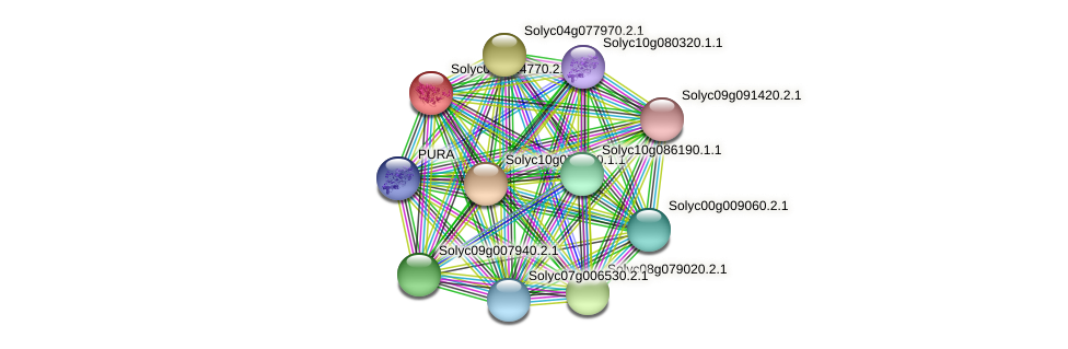 Solyc09g014770.2.1 protein (Solanum lycopersicum) - STRING interaction network
