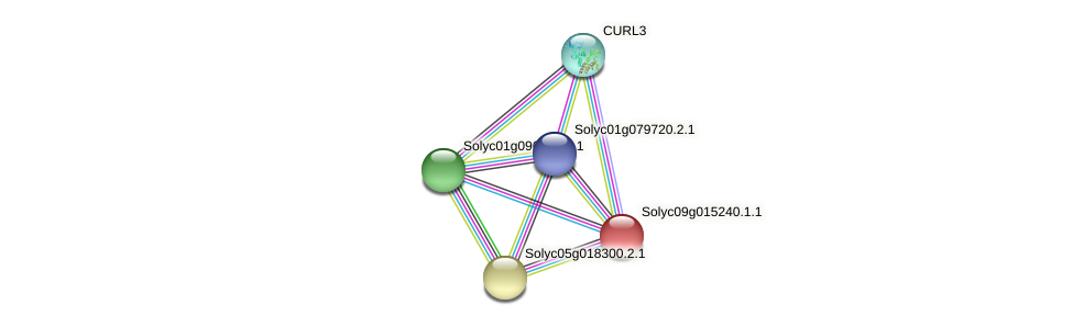 Solyc09g015240.1.1 protein (Solanum lycopersicum) - STRING interaction network