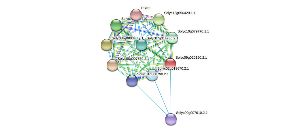 Solyc09g020190.2.1 protein (Solanum lycopersicum) - STRING interaction network
