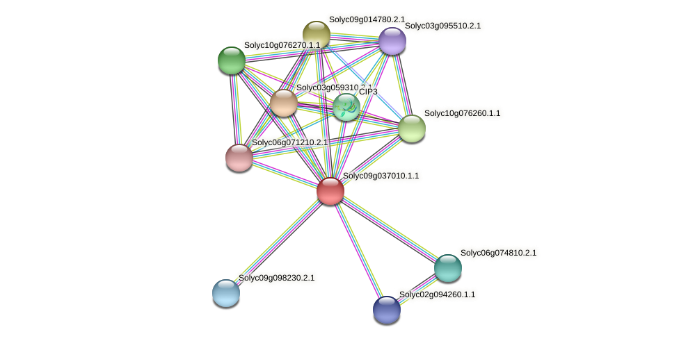 Solyc09g037010.1.1 protein (Solanum lycopersicum) - STRING interaction network