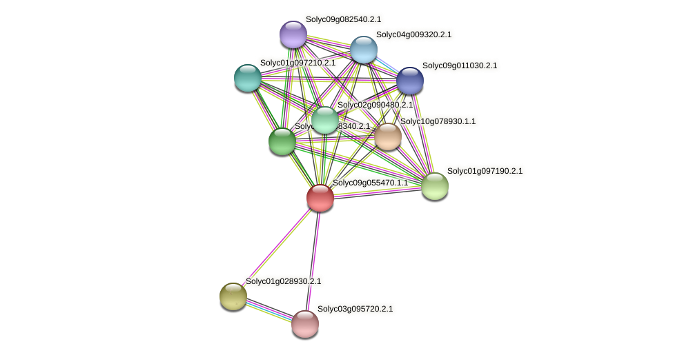 Solyc09g055470.1.1 protein (Solanum lycopersicum) - STRING interaction network