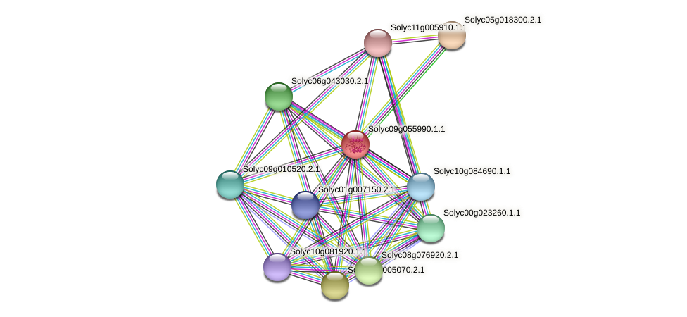 Solyc09g055990.1.1 protein (Solanum lycopersicum) - STRING interaction network