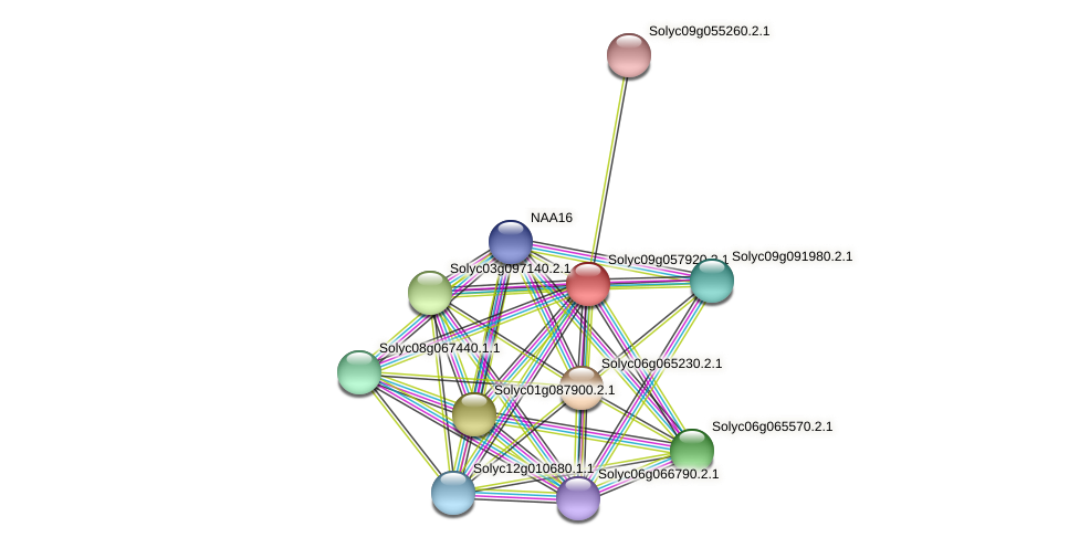 Solyc09g057920.2.1 protein (Solanum lycopersicum) - STRING interaction network
