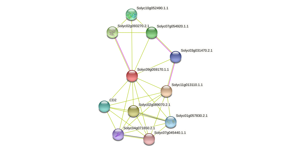 Solyc09g059170.1.1 protein (Solanum lycopersicum) - STRING interaction network