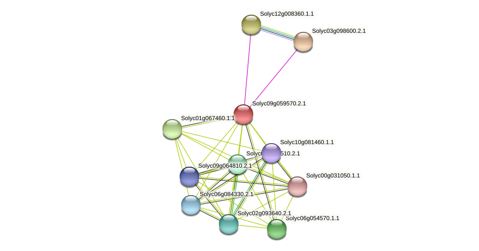 Solyc09g059570.2.1 protein (Solanum lycopersicum) - STRING interaction network