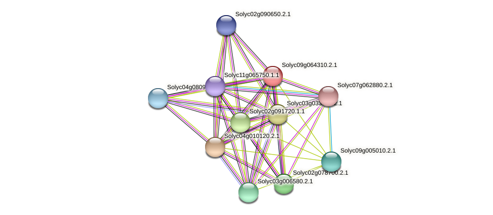 Solyc09g064310.2.1 protein (Solanum lycopersicum) - STRING interaction network