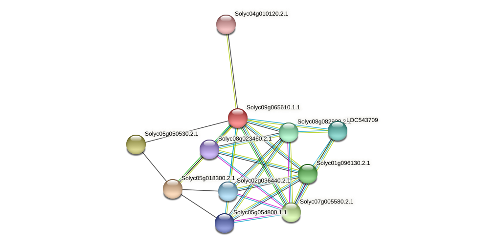 Solyc09g065610.1.1 protein (Solanum lycopersicum) - STRING interaction network