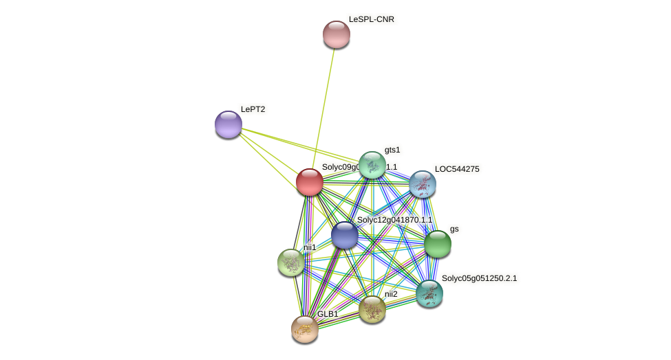 Solyc09g065740.1.1 protein (Solanum lycopersicum) - STRING interaction network