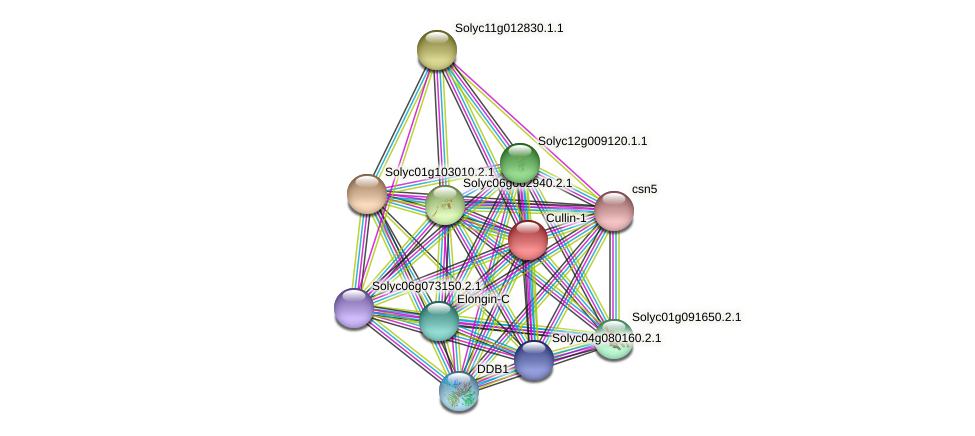 Solyc09g074680.2.1 protein (Solanum lycopersicum) - STRING interaction network
