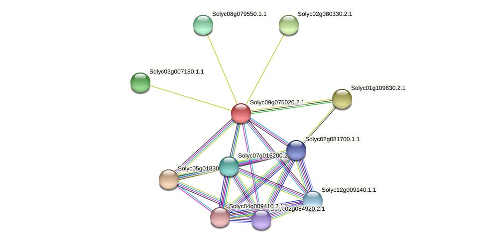 Solyc09g075020.2.1 protein (Solanum lycopersicum) - STRING interaction network